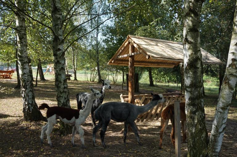 Zwierzęta w gospodarstwach agroturystycznych dodatkową atrakcją