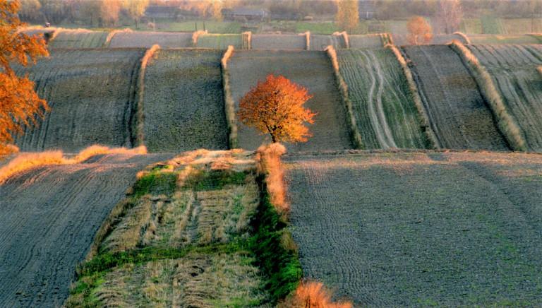 Barcza - pejzarz jesienny
