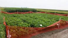Badane Rośliny W Słupii
