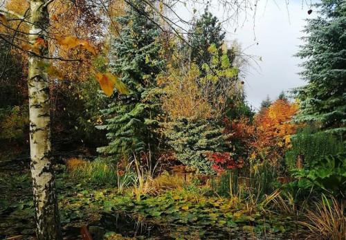 Ogród na Rozstajachwidok na drzewa i krzewy