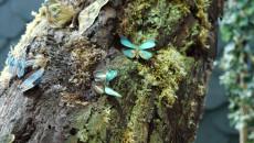Porośnięte Mchem Drzewo Z Motylami We Wnętrzu Ecb