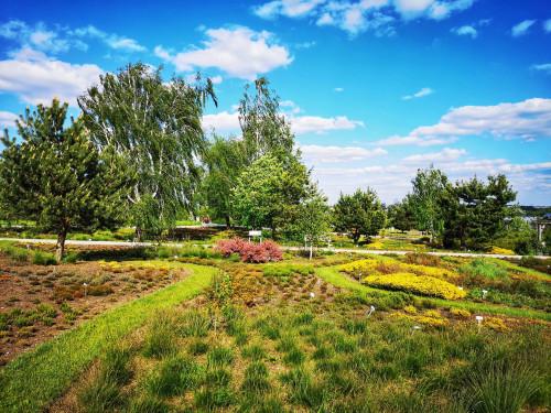Fragment Kieleckiego Ogrodu Botanicznego, murawa, w tle wrzośce, brzozy, świerki i zachmurzone niebo