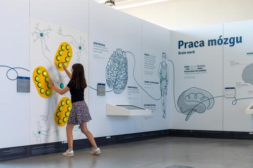 Eksponaty W Centrum Nauki Leonardo Da Vinci
