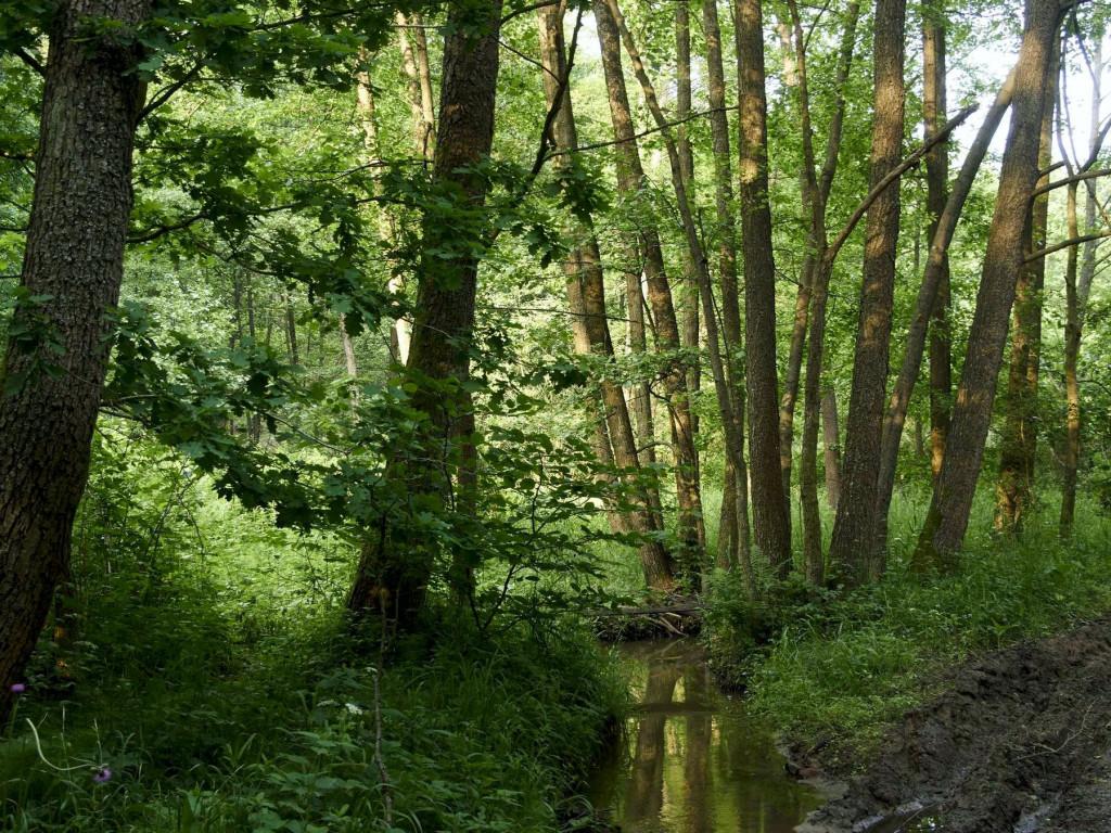 Mały strumyk w lesie. Góra Sieradowska